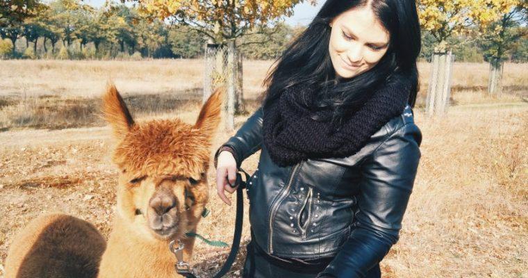 Gezellig op stap: alpacawandelen bij Alpacafarm Vorstenbosch